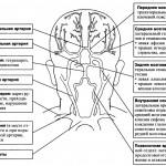 Топическая диагностика инсульта