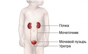заболевания мочевыделительной системы у детей, мочевыделительная система у детей, особенности мочевыделительной системы у детей