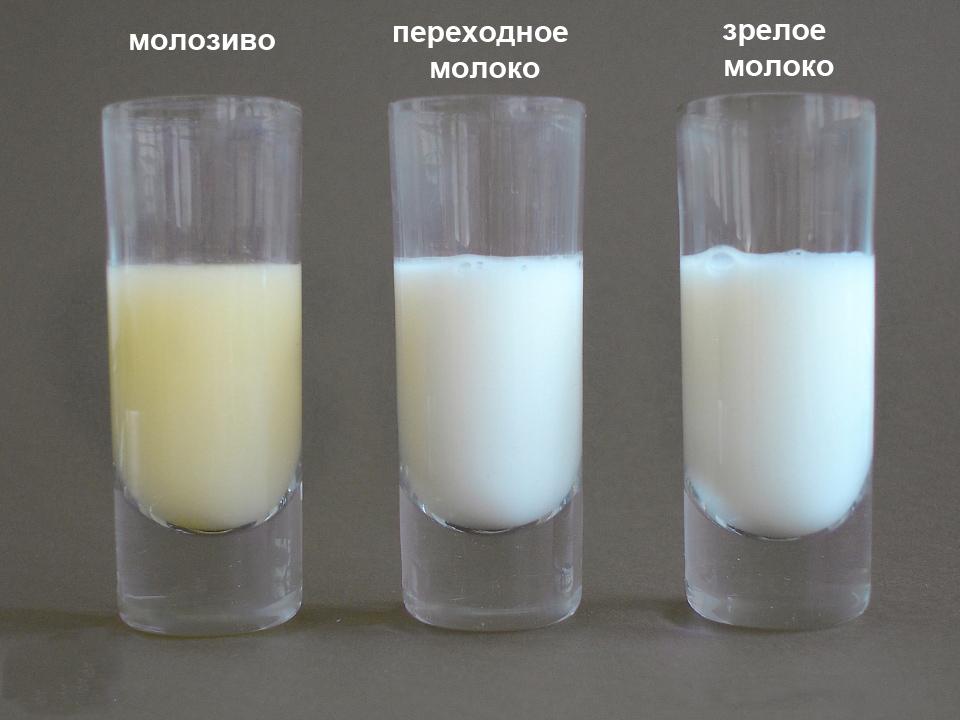 Как сделать с молока молозиво