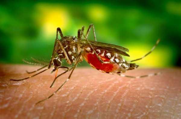 малярия, малярия лечение, возбудитель малярии, диагностика малярии