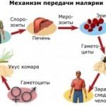Малярия. Симптомы, диагностика и лечение