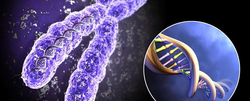 генетика бактерий