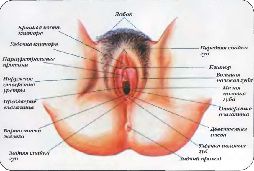 Женский половой орган на фото 1 фотография