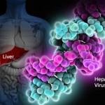 Гепатит С: пути передачи, симптомы и лечение