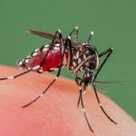 Вирус Зика: причины, симптомы и лечение