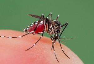 вирус зика, комар вирус зика вирус зика страны, вирус зика симптомы, вирус зика фото, вирус зика 2016