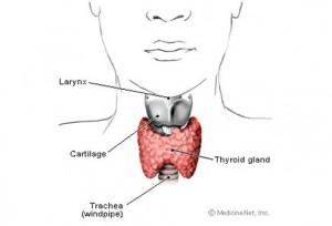 заболевание гипертиреоз, гипертиреоз щитовидной лечение, гипертиреоз симптомы +и лечение, гипертиреоз щитовидной железы, гипертиреоз, гипертиреоз лечение, гипертиреоз симптомы, гипертиреоз щитовидной,