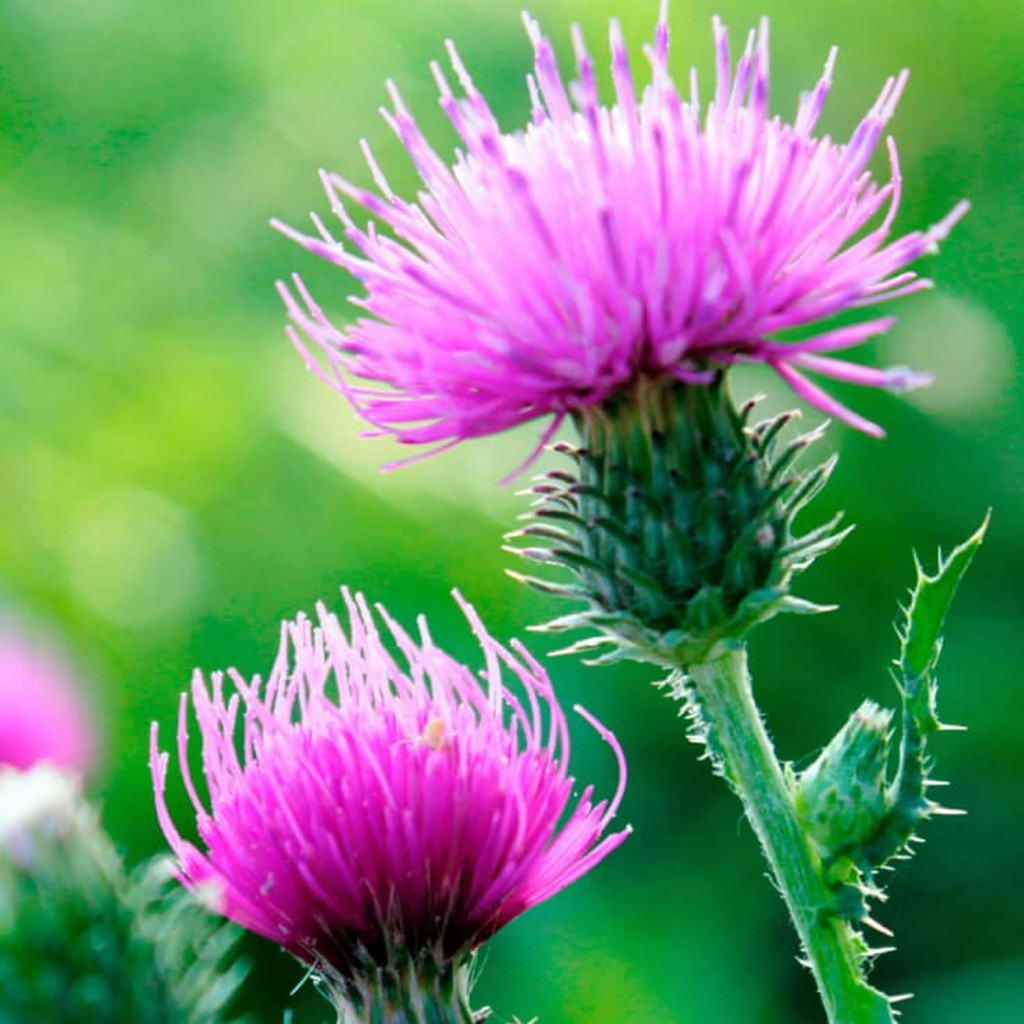 фитотерапия травы, лечение фитотерапией, фитотерапия лекарственные растения народной медицины, лекарственные растения фитотерапия, фитотерапия лечение растениями,