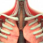 Применение ЛФК для тренировок дыхательной мускулатуры