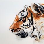 Тигр дал положительный результат на COVID-19
