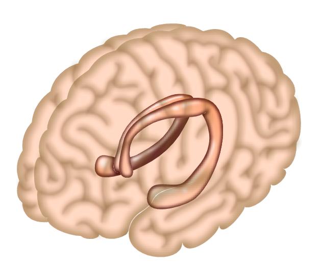 Ваш мозг должен быть готов к запоминанию?